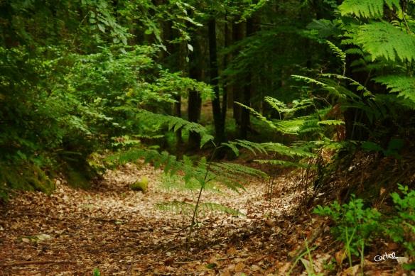 Forêt de Sillé