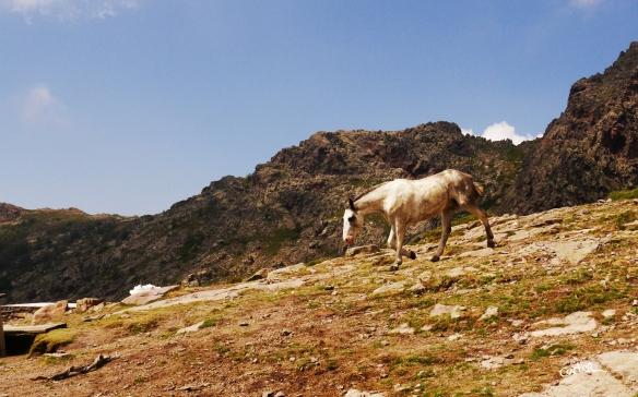 Des chevaux en liberté dans la zone de bivouac