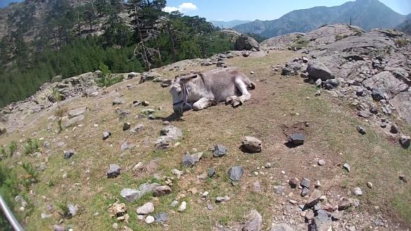 Un des deux ânes
