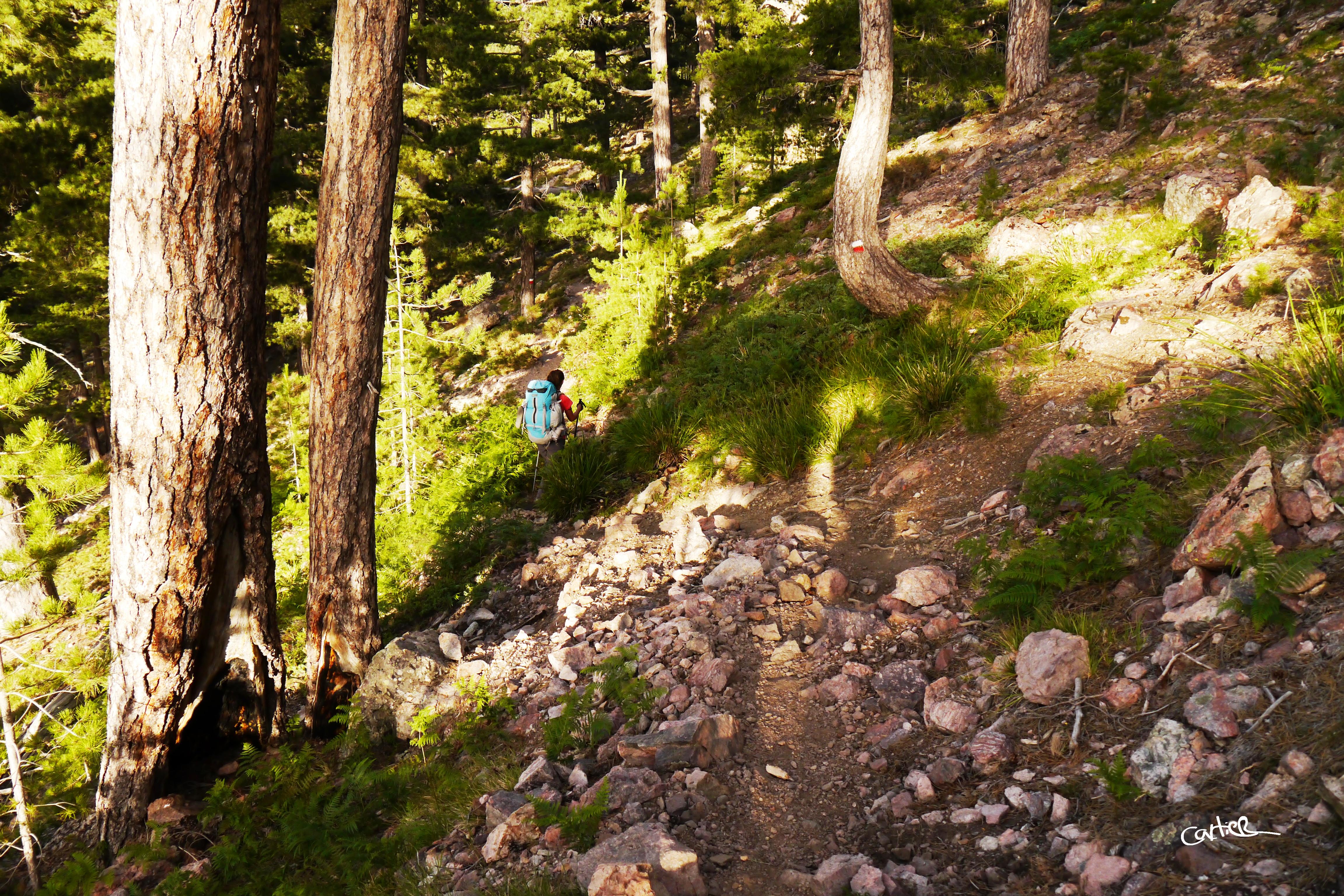 Sentier dans les bois