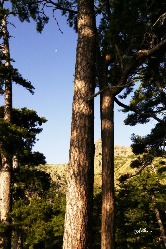 Forêt de résineux - imaginez les odeurs...