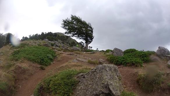La Bocca San Petru et ses arbres martyrisés par le vent